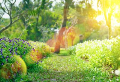 Springtime_XL_410_282_c1