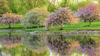 springtime-wallpaper-3